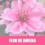 Essência Concentrada 100ml Flor De Ameixa