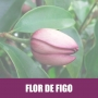 Essência Concentrada 100ml Flor De Figo