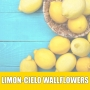 Essência Concentrada 100ml Limon-cielo Wallflowers