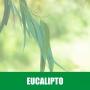 Essência HS 100ml Eucalipto 1/200