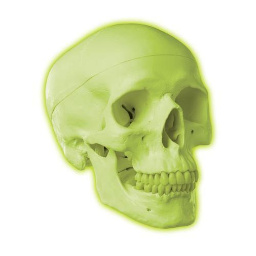 Crânio Esqueleto Caveira Neon