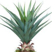 Planta Ornamental Agave Verde - 70cm
