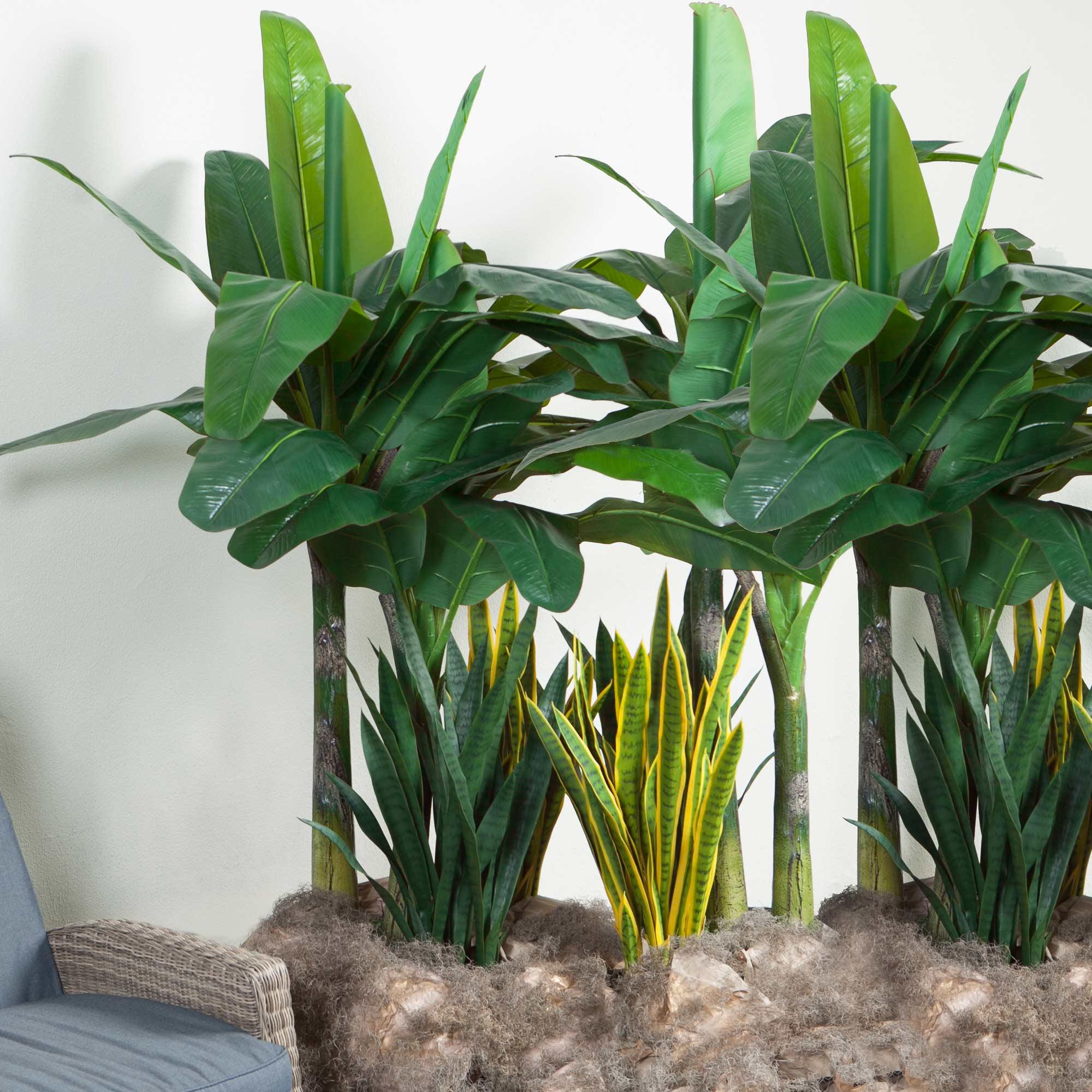 Planta Ornamental Bananeira - 180cm