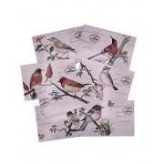 Postal - Birds