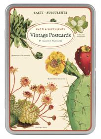 PRÉ-VENDA LINHA SPECIALS Postais Vintage Succulents (LEIA A DESCRIÇÃO)