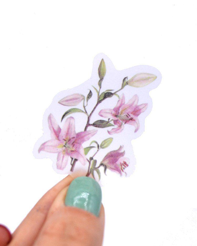 Adesivos - Botânica