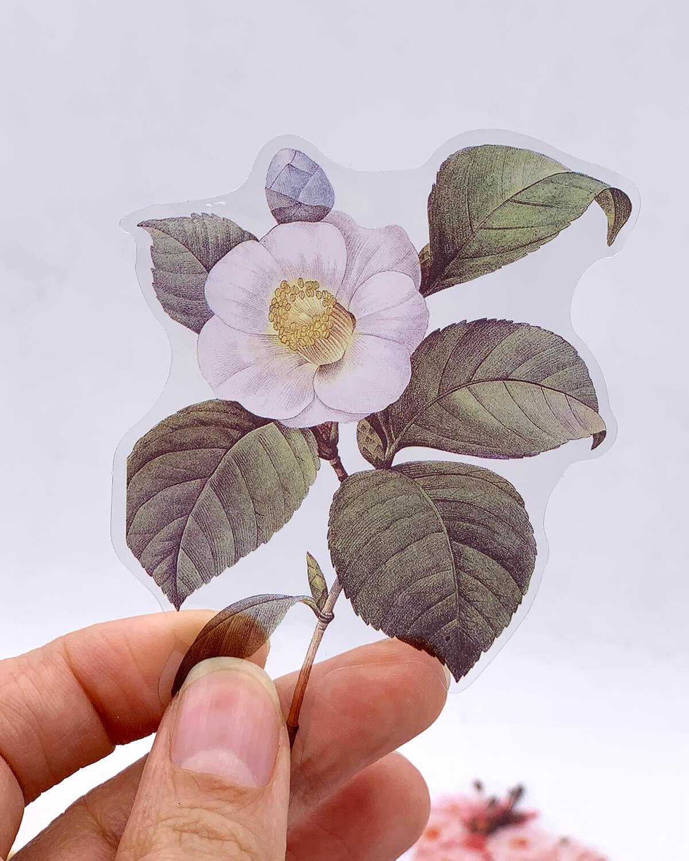 Adesivos  Botânica II