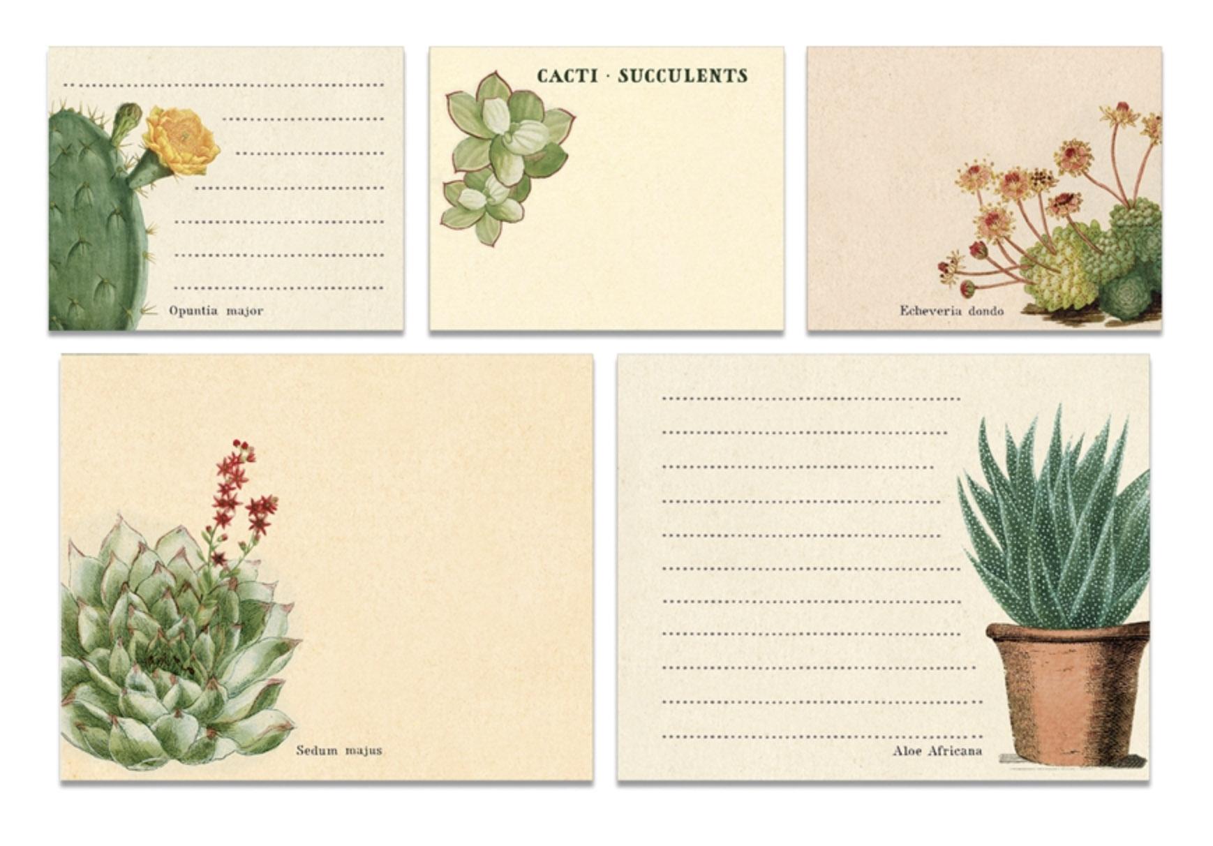 PRÉ-VENDA LINHA SPECIALS Conjunto de Post-it Succulents (LEIA A DESCRIÇÃO)
