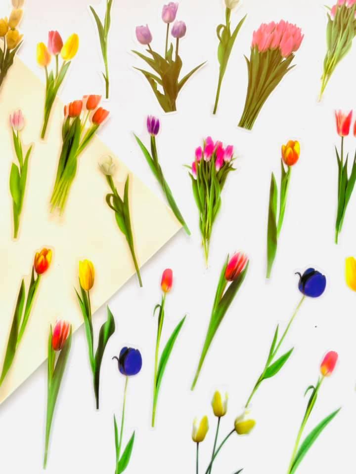 Adesivo Flores delicadas Tulipas