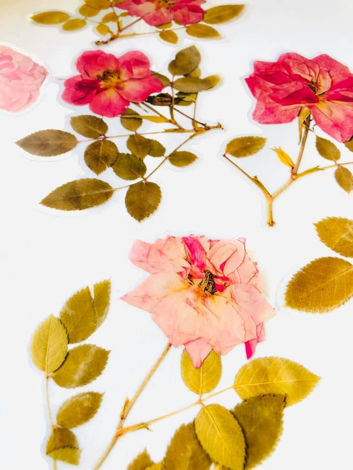Adesivo Rosas Folhas Secas 6 un