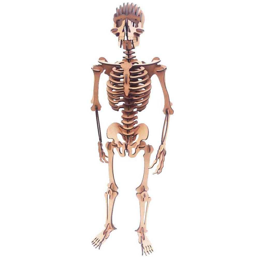Kit 4 Esqueleto Humano 59 cm coleção Quebra Cabeça 3D mdf