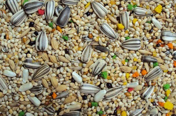 Mix ração Calopsitas, periquitos, Agapornis sementes, frutas e Mel 10 kg  - Onda do Pet