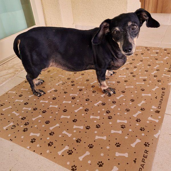 Kit Com 3 Unidades Ecopet Ecológico Jornal Para Cães e Gatos Bobina Com 60 cm de largura (40 metros de folha)  - Loja Onpaper