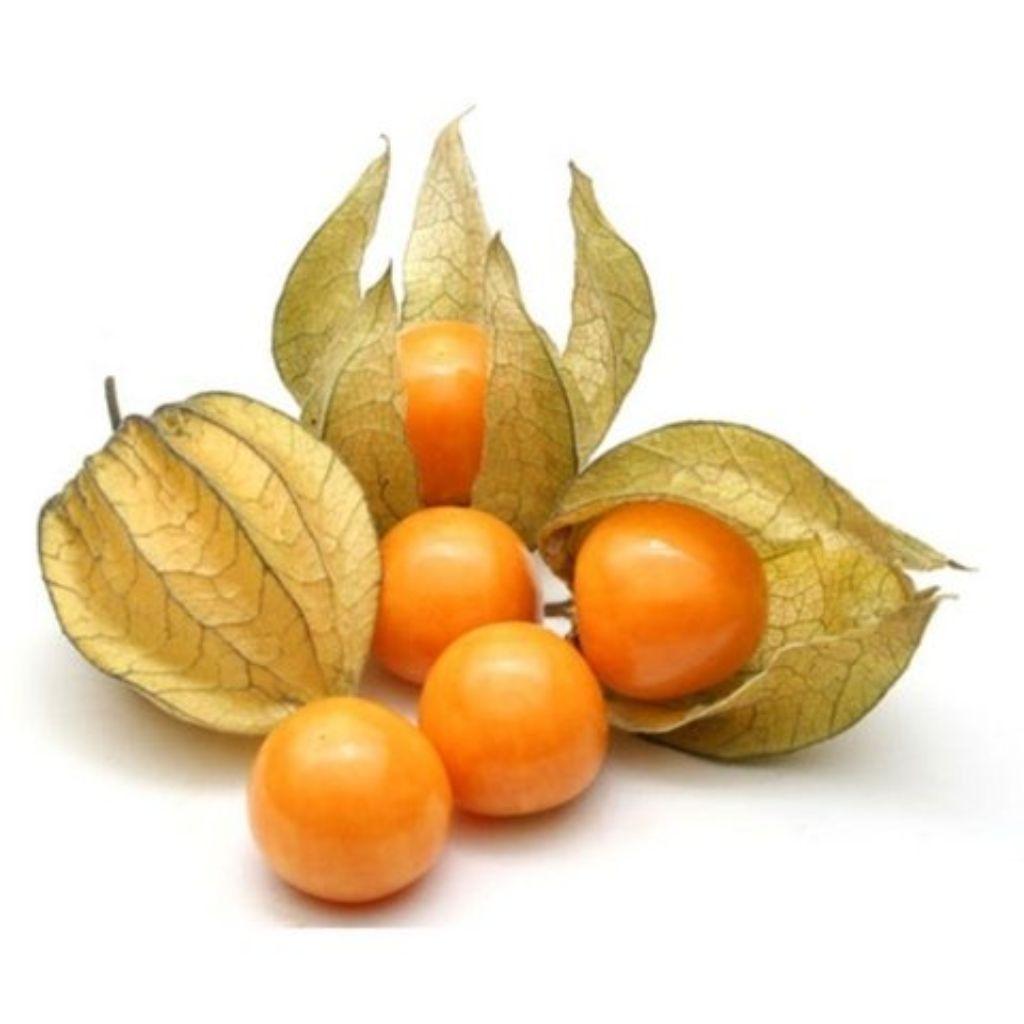 PHISALES (100G)  - JJPIVOTTO - Comercio de Frutas