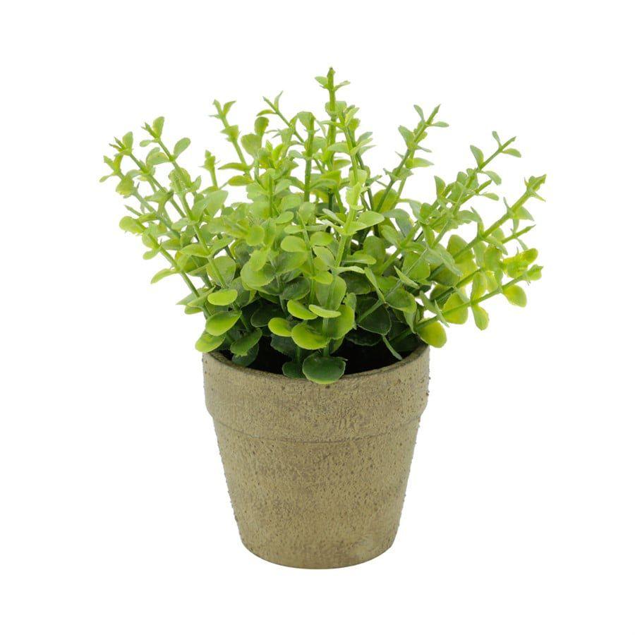Mini Vaso Papel Sedum Suculenta Verde