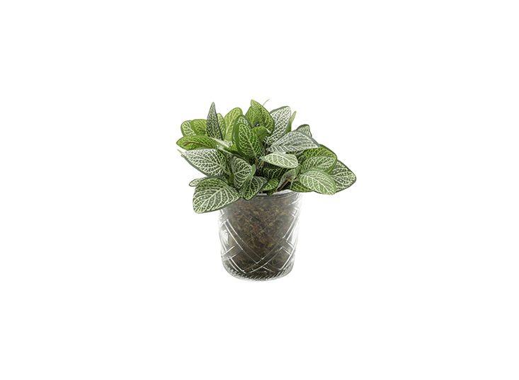 Vaso para Suculentas Plantas e Flores Transparente