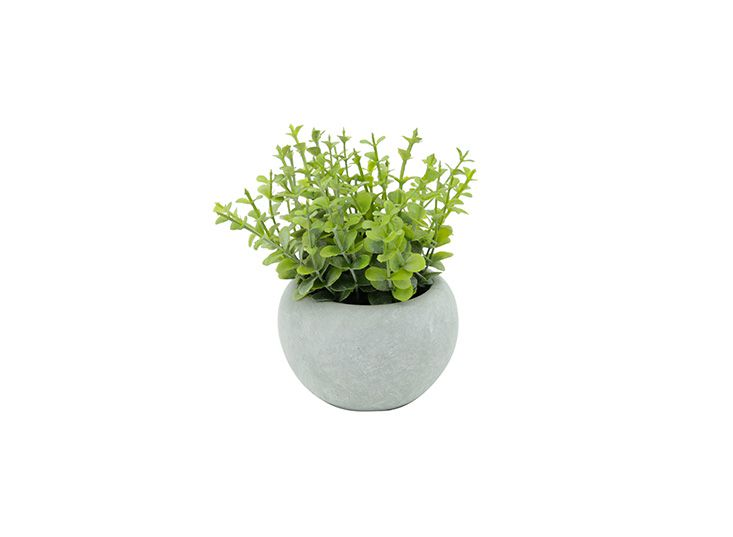 Vaso De Cimento Com Planta Oregan Urban 15x15x14,5cm