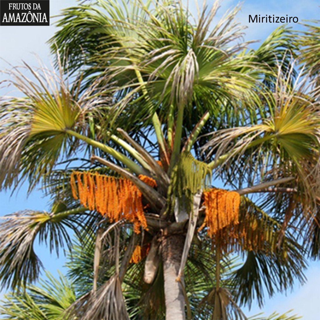 Kit Agarradinhos de Miriti  - Frutos da Amazônia