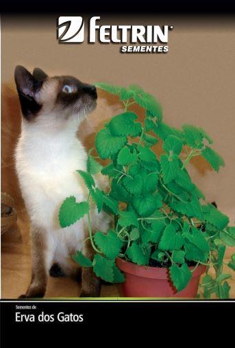 Erva-Dos-Gatos - contém 150 miligrama(s) de semente(s)