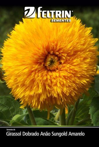 Girassol Dobrado Anão Sungold Amarelo - contém 600 miligrama(s) de semente(s)