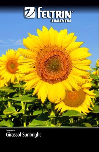 Girassol Sunbright - contém 600 miligrama(s) de semente(s)