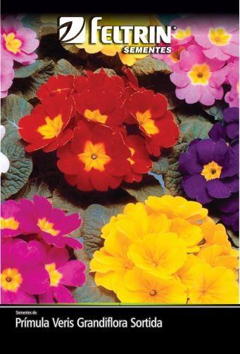 Prímula Veris Grandiflora Sortida - contém 100 miligrama(s) de semente(s)