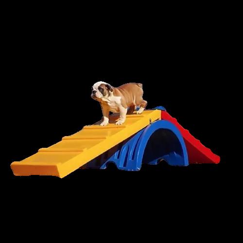 Rampa para Cachorro Escalada Pet Place - Envio Imediato
