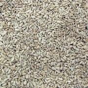 Semente de Girassol Torrada S/Casca C/Sal (Granel 100g)
