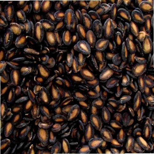 Semente de Melancia (Granel 100g)