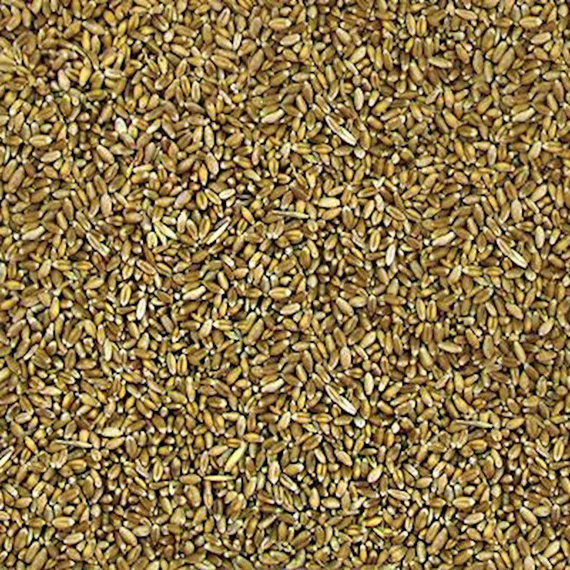 Trigo em Grãos (Granel 100g)