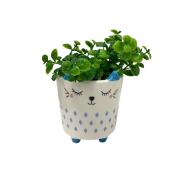 Vaso cartoon gato