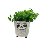 Vaso cartoon panda