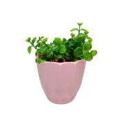 Vaso plástico geométrico: rosa