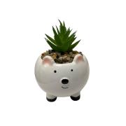 Vaso urso com planta