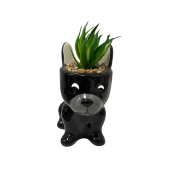 Vaso cachorro com planta