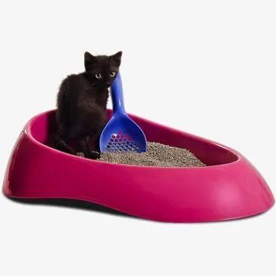 Caixa De Areia Família De Estimacao Banheiro Do Gato