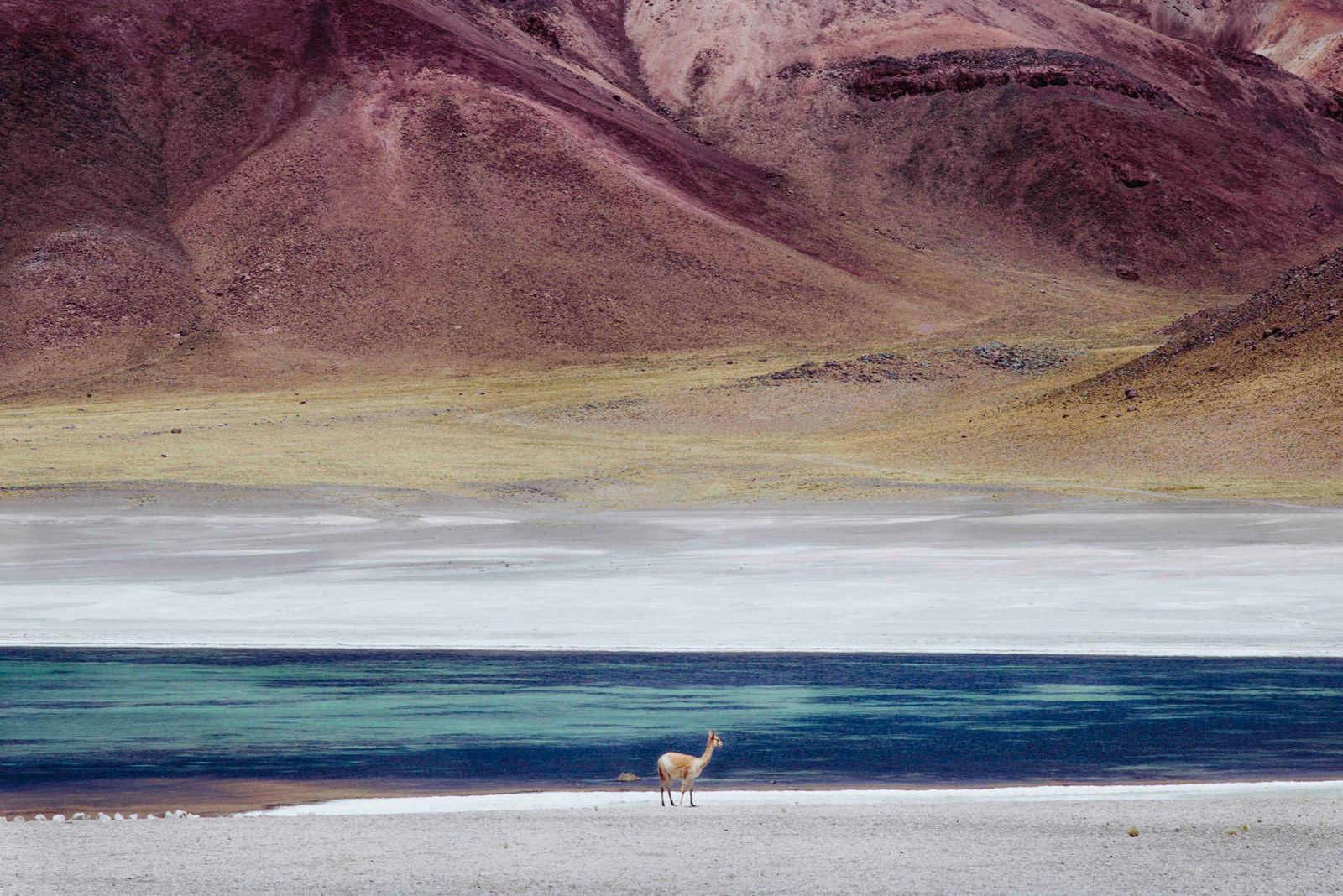 Dali Alpaca, 2016, da série Patagonia a Uyuni
