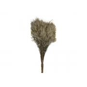 Folhagem Preservada Pluminha Natural 60 cm