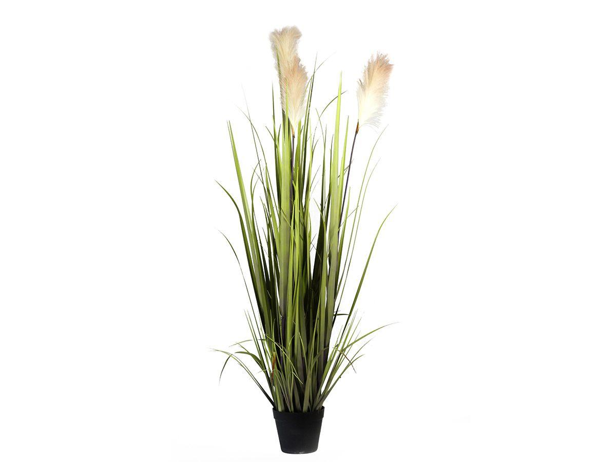 A GRASS VERDE/VINHO C/RABO DE BURRO 1,25MT C/VASO