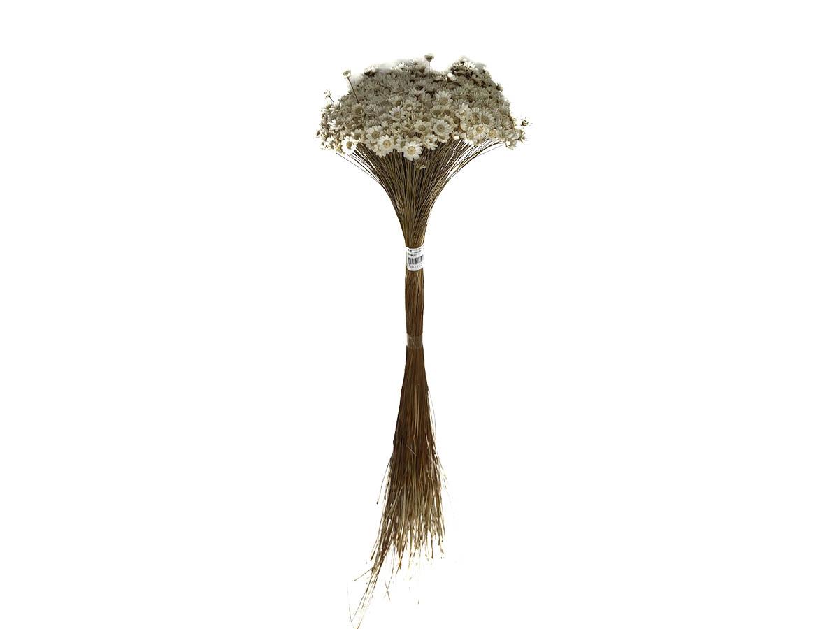 Folhagem Preservada Botão Branc Natural - 55 cm