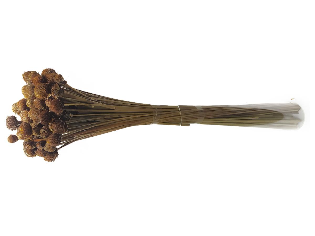 Folhagem Preservada Cabeça Nego 50cm
