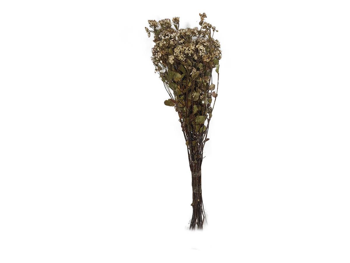 Folhagem Preservada Chuvisco Natural - 60 cm