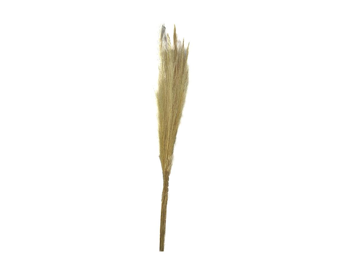 Folhagem Preservada Rabo de Burro - 100 cm