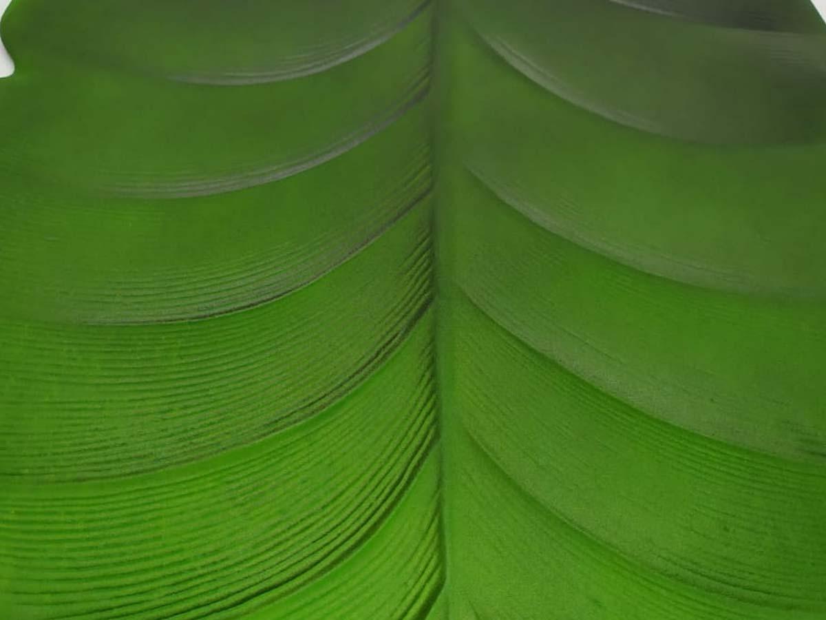 Lugar Americano Costela de Adão EVA Verde 45x40cm