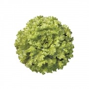 Sementes De Alface Valentina - 250.000 sementes - Sakata