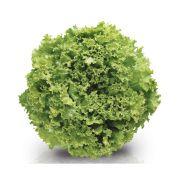Sementes De Alface Vera - 25.000 sementes - Sakata