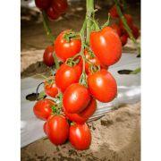 Sementes De Tomate Híbrido Pai Pai - 1.000 Sementes