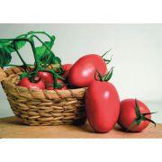 Sementes de Tomate Híbrido Totalle - 1.000 Sementes