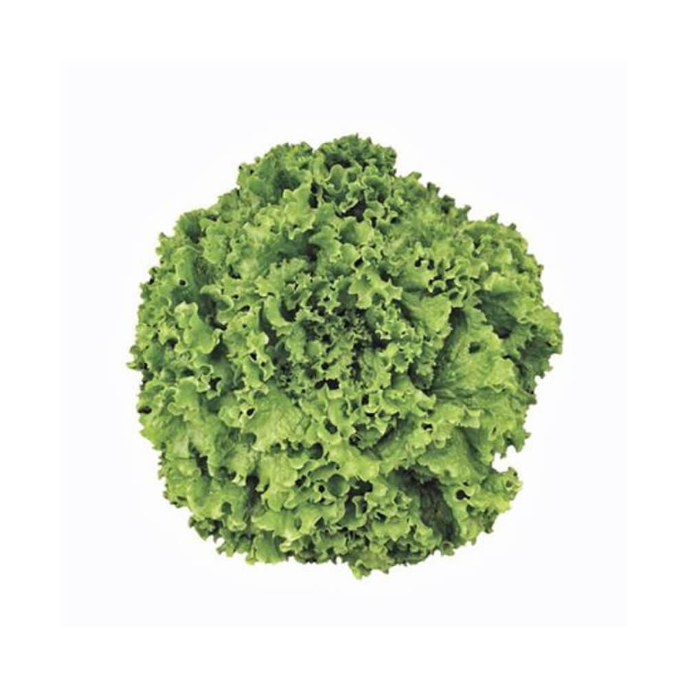 Sementes De Alface Cristal - 5.000 sementes