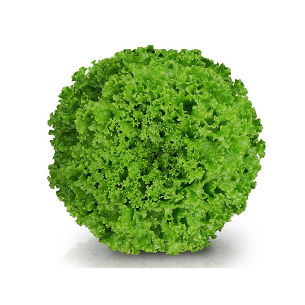 Sementes De Alface Jade - 25.000 sementes - Sakata